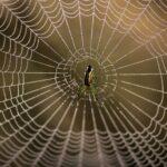 Edderkoppe-skattejagt