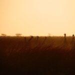 Rejsen til Afrika