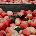 Æbler i kar