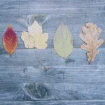 Efterårs-kunst med blade