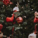 Hvad juletræet gemmer…