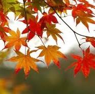 Ud i efteråret!