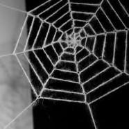 Det minder om et edderkoppehjem